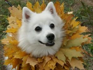 Perro con un collar de hojas