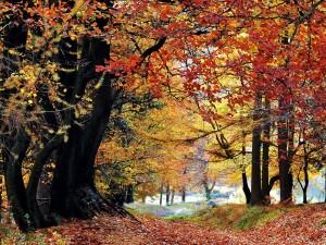 Postal: Árboles en otoño