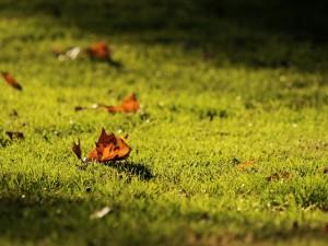 Hojas secas sobre la hierba