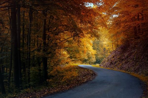 Curva en la carretera del bosque