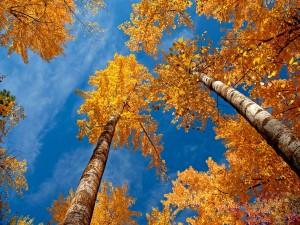 Postal: Árboles y el cielo