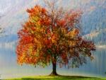 Árbol con hojas de varios colores