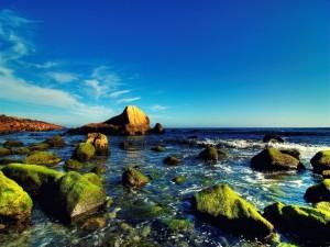 Postal: Piedras con musgo en la costa