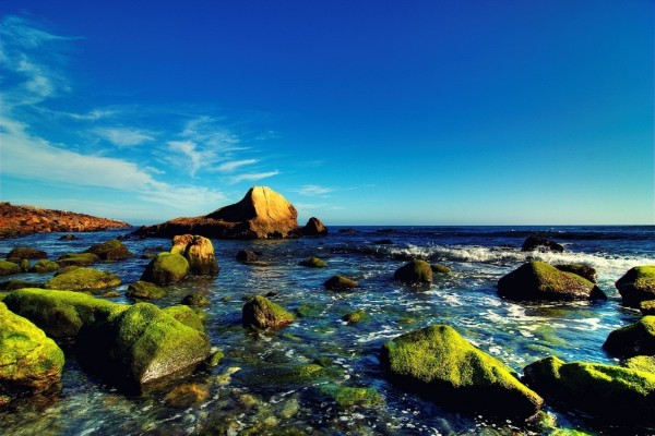 Piedras con musgo en la costa