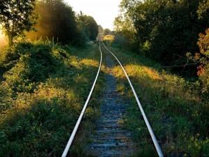 Postal: Vía de tren entre plantas y árboles