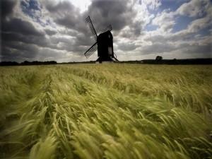 Molino de viento y trigo verde