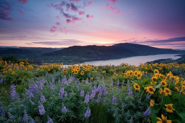 Flores silvestres en un bello lugar