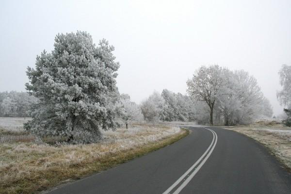 Árboles helados a ambos lados de la carretera