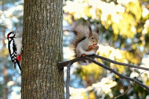 Pájaro carpintero y ardilla en el árbol