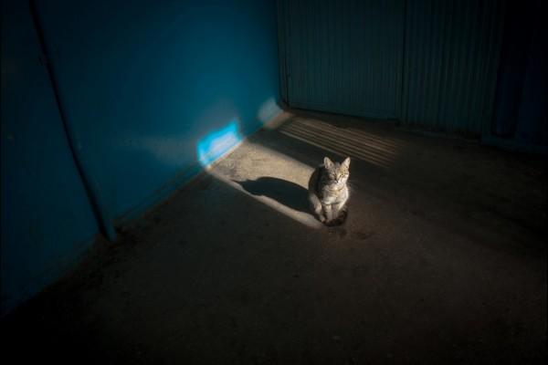 Gatito encandilado