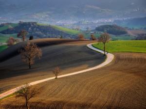 Postal: Carretera atravesando un campo