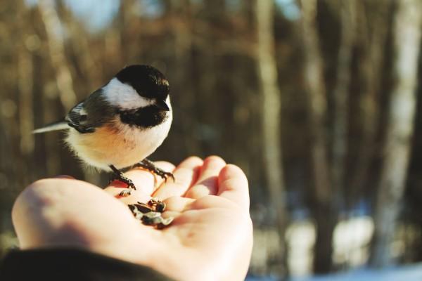 Pájaro en mi mano