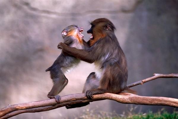 Madre e hijo enojados