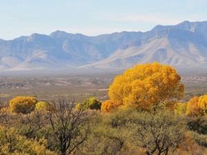 Vista parcial del desierto de Arizona