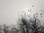 El vuelo de las palomas