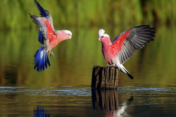 Aves exóticas junto al agua