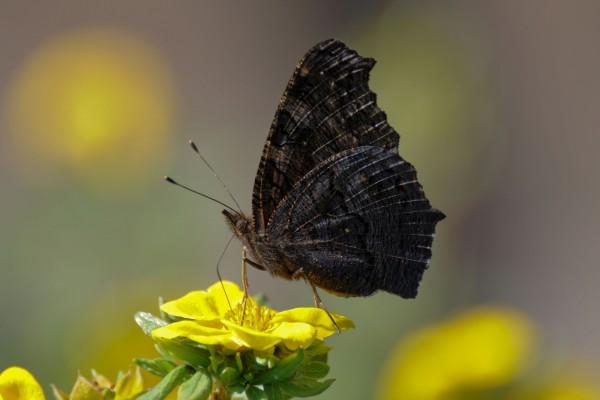 Mariposa posada en la flor amarilla