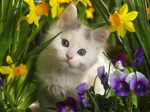 Tierno gatito entre las flores de un jardín