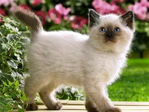 Gatito curioso caminando