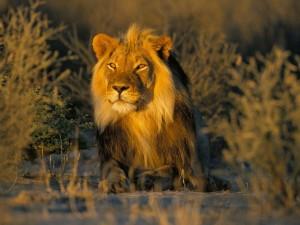 Postal: La visita del rey león