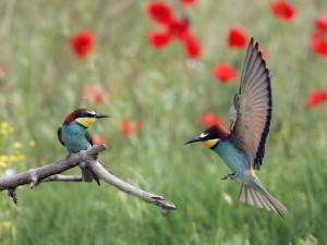 El juego de las aves