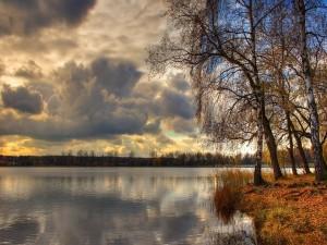 Árboles junto al lago y nubes en el cielo