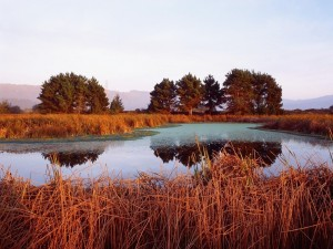 Laguna entre juncos secos