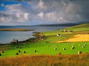 Postal: Verdes prados junto al mar