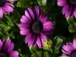 Flores de primavera color púrpura