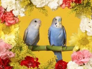 Postal: Periquitos rodeados de flores