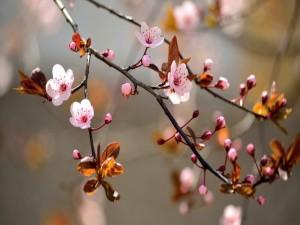 Rama con flores en primavera