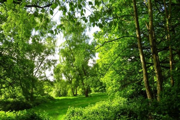 Bosque en verano
