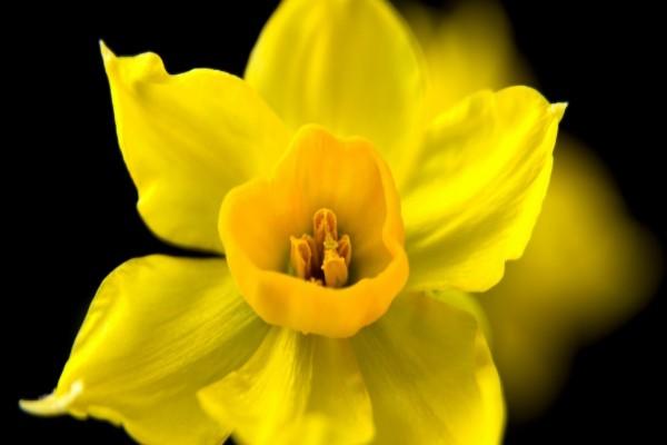 Flor con pétalos amarillos