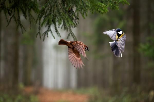 Vuelo de pájaros en el bosque