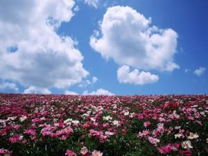 Alegre campo en primavera
