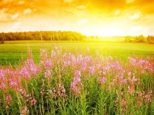 Postal: Flores de primavera en el campo