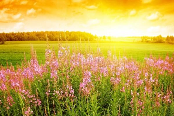 Flores de primavera en el campo