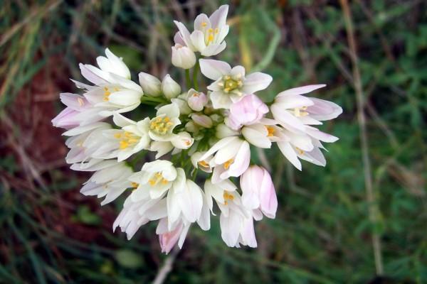 Conjunto de florecillas