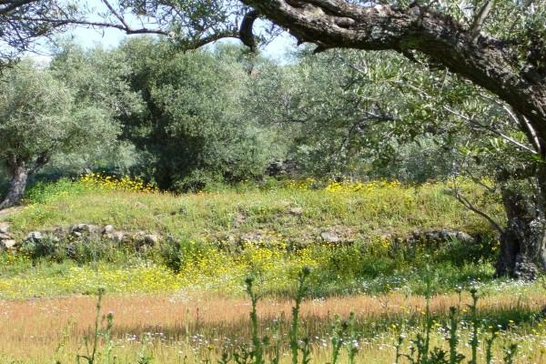 Árboles y flores en el campo