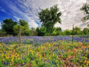 Campo de flores color púrpura