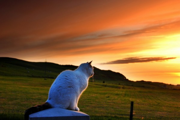 Gato mirando el amanecer