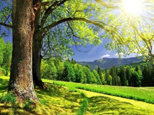 Postal: Árboles un caluroso dia
