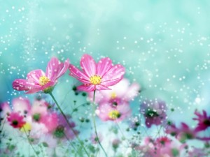 Postal: Flores y destellos