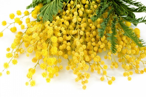 "Ramo con flores ""Mimosa""color amarillo"
