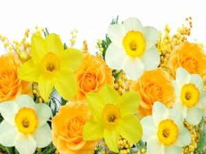 Postal: Bellas flores color amarillo