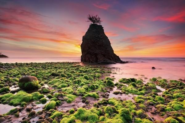 Piedras y algas en la orilla del mar