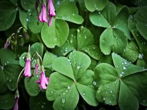 Planta con hojas verdes y flores rosas