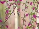 Colibrí libando néctar de las flores