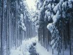 Riachuelo entre nieve y árboles