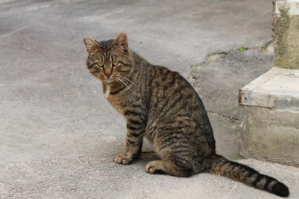 La mirada del gato callejero